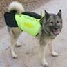 Protector skyddsväst för hund
