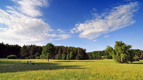 Öppna landskap är människan och betesdjurens förtänst