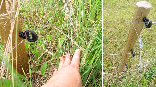 Svårt att hålla de nedersta trådarna på stängslet fria från växtlighet.
