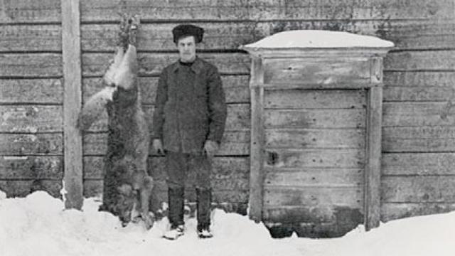 Den sista finska vargen