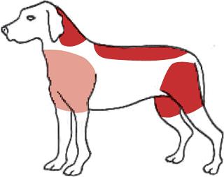 Vargens bitskador på hundar och mindre djur.