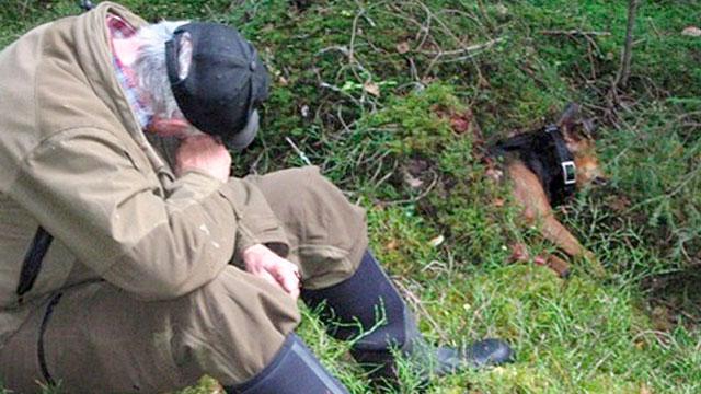 Förtvivlad hundägare med vargdödad stövare