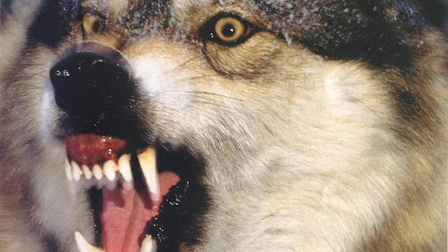 vad är rabies