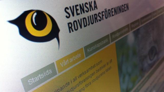 Svenska Rovdjursföreningen ogillar skyddsjaktsbeslut på närgångna vargar