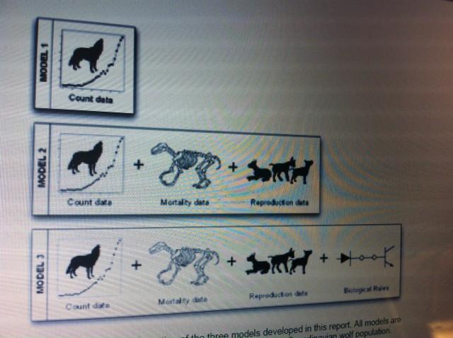 minsta livskraftiga population är 40 vargar