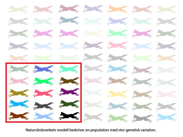 Naturvårdsverkets modell beskriver en population med stor genetisk variation.