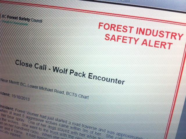 skogsarbetare flydde från vargflock