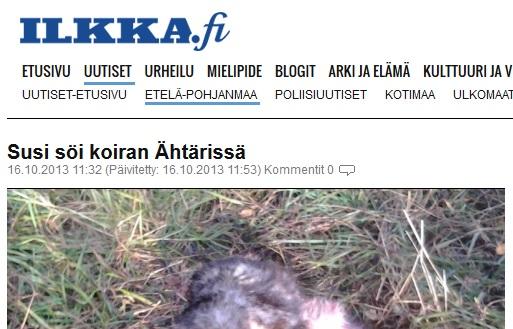 varg tog hund på gårdsplan i finland