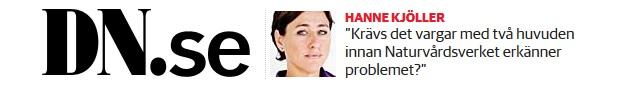 Lena Ek svarar på Hanne Kjöllers halvsanningar om varg