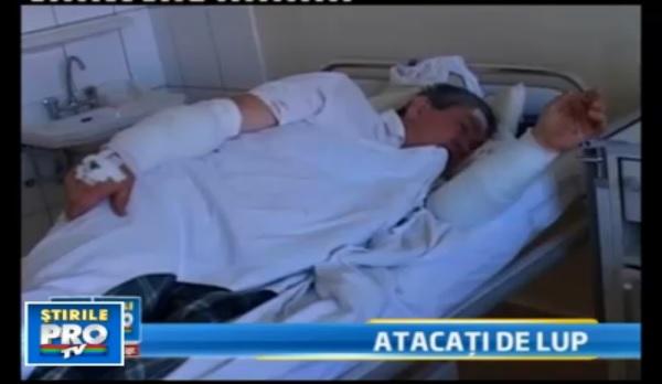 flera personer svårt bitna av varg rumänien