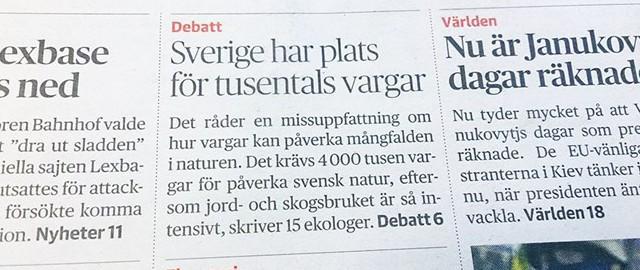 missvisande rubrik om varg i dagens nyheter