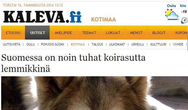 omkring 1000 varghybrider i finland