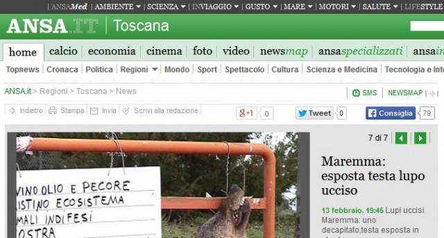 avhugget varghuvud lämnat i protest italien