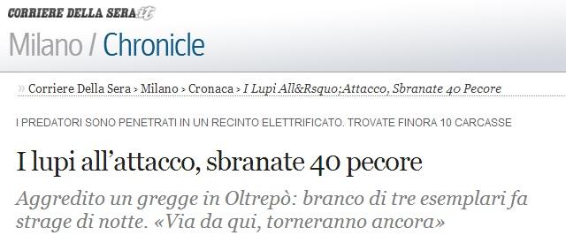 omfattande vargangep - 40 får dödade italien