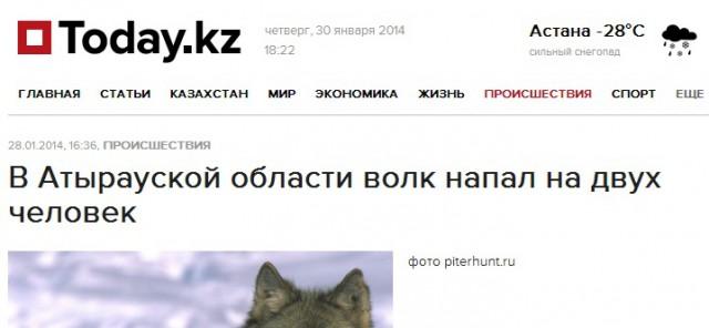 två personer angripna av varg kazhakstan
