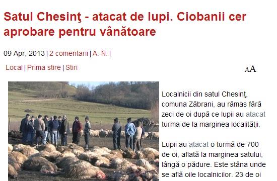 23 får vargdödade vid vargangrepp i Rumänien