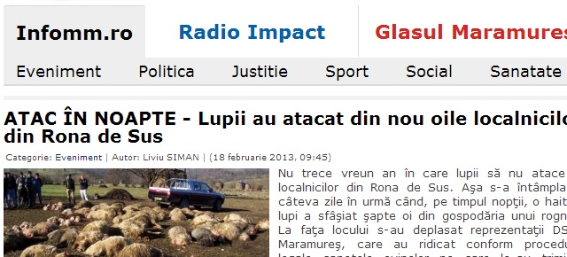 angripande vargflock gav många döda får rumänien