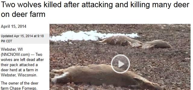 varghybrider skjutna efter omfattande angrepp usa