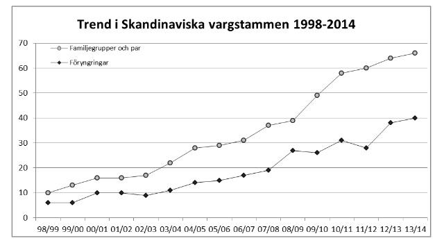 Nuvarande skandinavisk vargstam större än 500 individer