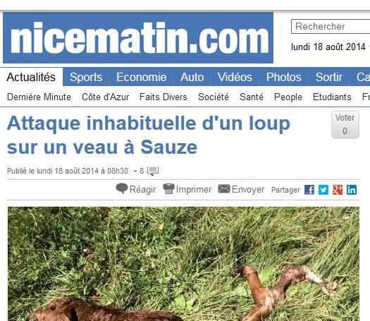 ännu en kalv vargdödad frankrike