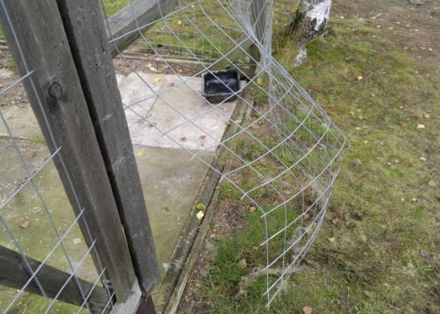 varg tog hund i hundgård