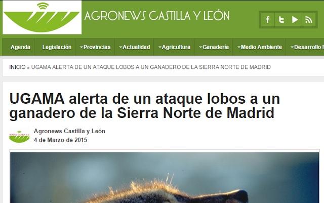 lantbrukare trängd av vargflock spanien