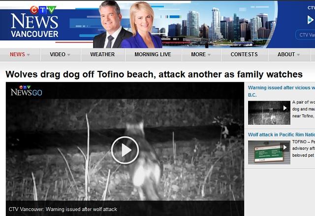 varg tog hund framför familj